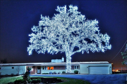 christmas,christmas lights,tree,holidays,g rated,win,Hall of Fame,best of week
