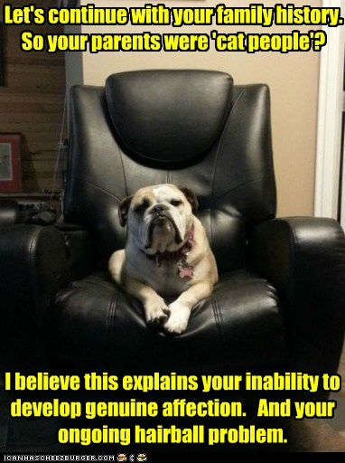 chair,dogs,cat people,therapy,bulldog,therapy dog,psychoanalyst