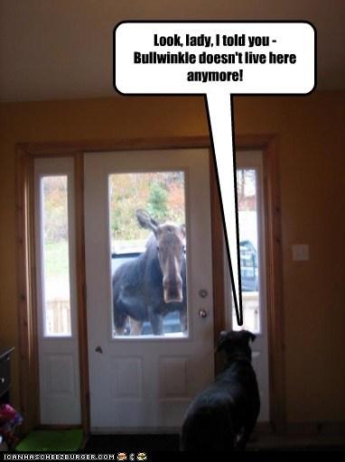 annoyed cartoons moose - 6876394240
