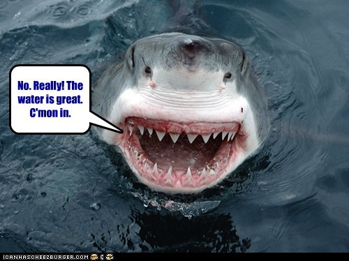 come in water lying sharks trust me eating you - 6876474624
