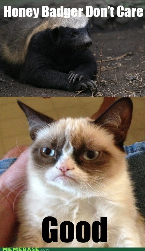 tardar sauce,honey badger,Grumpy Cat