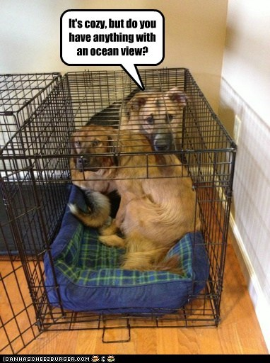 dog-bed-cozy,dogs,ocean view,view,hotel,kennel,what breed