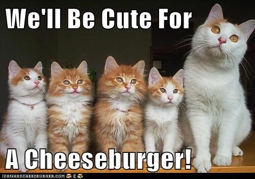 Cheezburger Image 6877328384