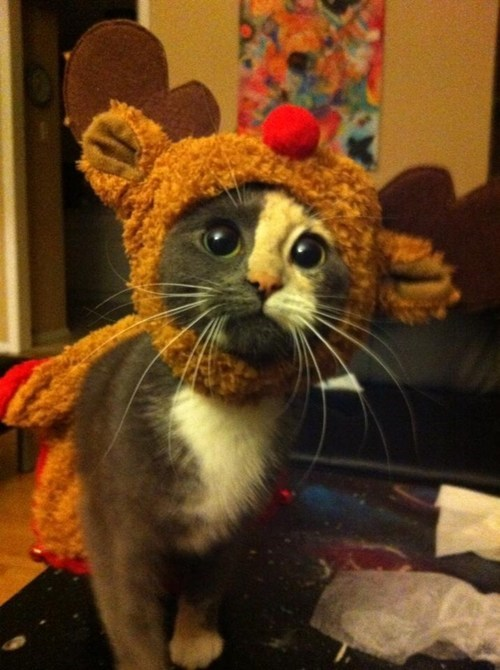 reindeer,cat costumes