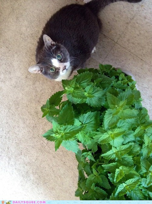 All this catnip for me?!?