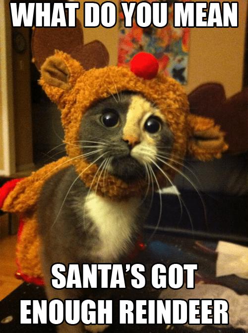 Sad christmas santa clause reindeer captions costume santa Cats holidays - 6877742080