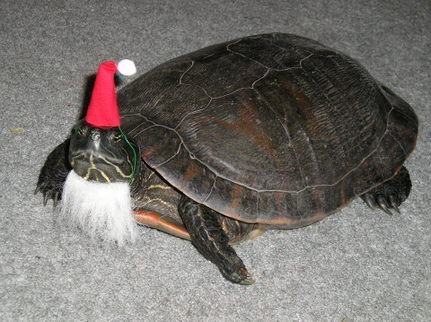 christmas santa turtle funny animals - 6877798656