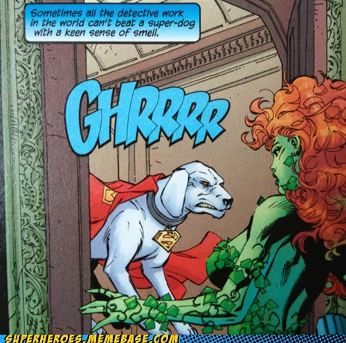 krypto,poison ivy,superman