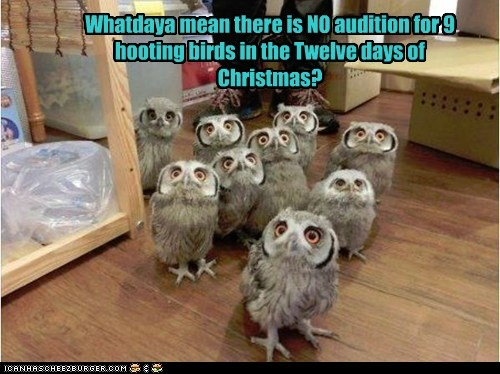 Whatdaya mean there is NO audition for 9 hooting birds in the Twelve days of Christmas?