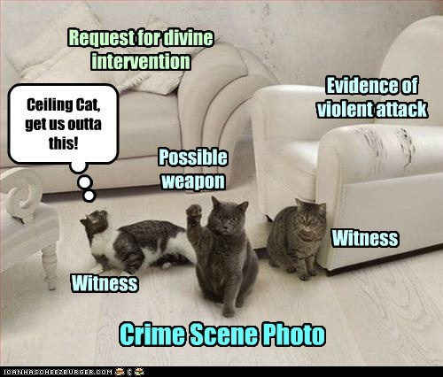 Crime Scene Photo Evidence of violent attack Possible weapon Witness Witness Ceiling Cat, get us outta this! Request for divine intervention