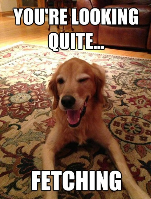 compliment,dogs,pun,clever,fetching,wink,golden retriever