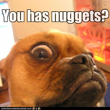 hungry,dogs,close up,nuggets,food,what breed