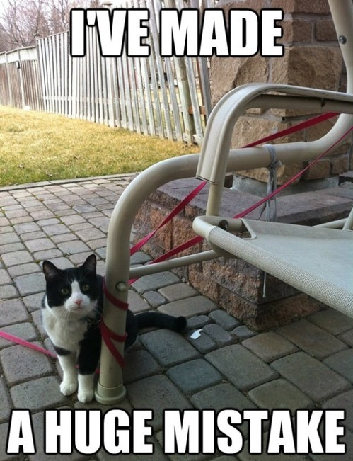 tangled stuck captions leashes arrested development Cats - 6878035200