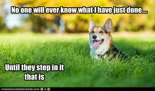 Funny meme of a dog in a field captioned on how he may have secretly pooped int he field.