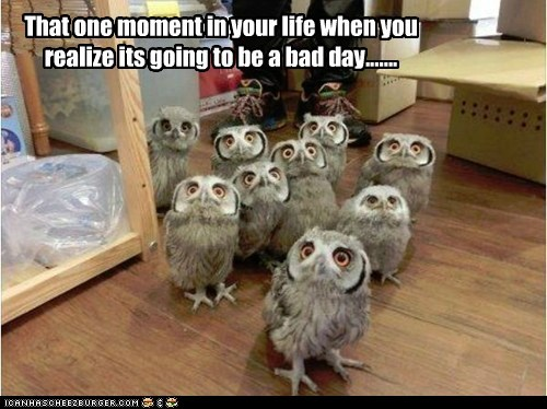 that moment,owls,scared,bad day,realize