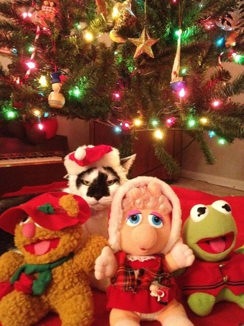 the muppets,cyoot kitteh of teh day,christmas,stuffed animals,santa hats,christmas trees,grumpy,angry,Cats