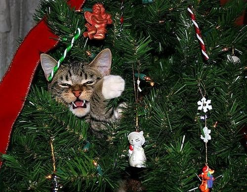 cyoot kitteh of teh day,christmas,trees,ornaments,christmas trees,Cats