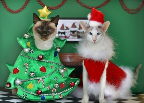 cyoot kitteh of teh day,christmas,christmas trees,costume,santa claus,Cats,derp