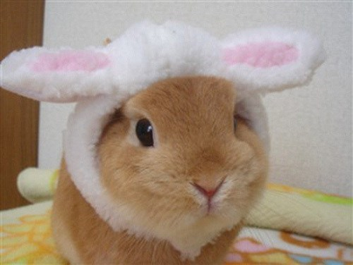Bunday costume bunny ears rabbit bunny squee - 6878332928