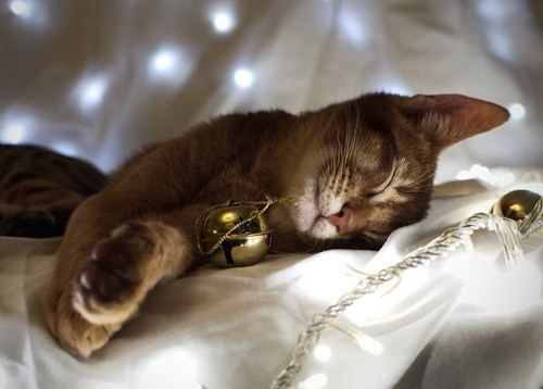 cyoot kitteh of teh day,christmas,jingle bells,bells,Cats,sleeping