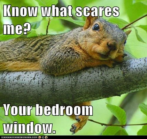 bedroom window,scary,peeking,scares,squirrels