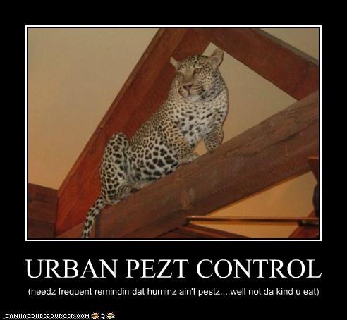 URBAN PEZT CONTROL (needz frequent remindin dat huminz ain't pestz....well not da kind u eat)