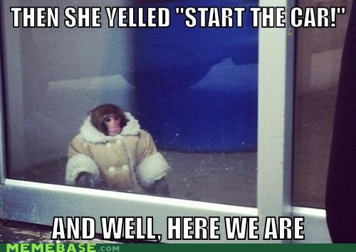 ikea monkey,start the car,ikea,here we are