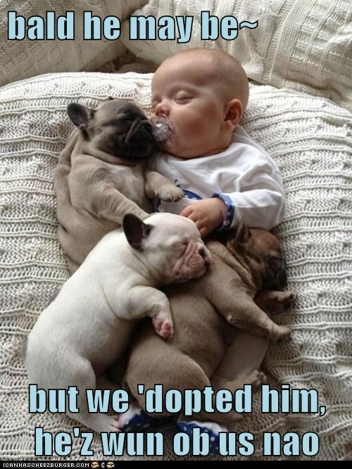 Babies dogs one of us puppies french bulldogs adopted cuddling sleeping - 6879288576