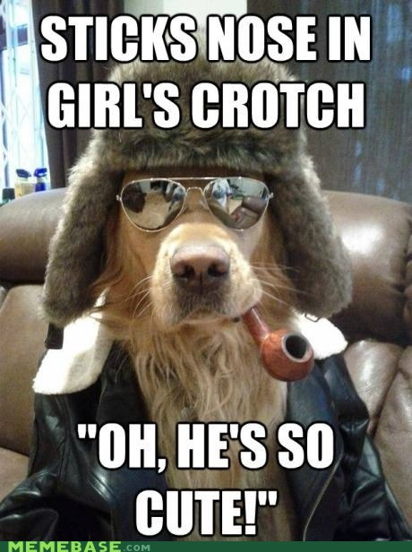 crotches cute dogs - 6880055808