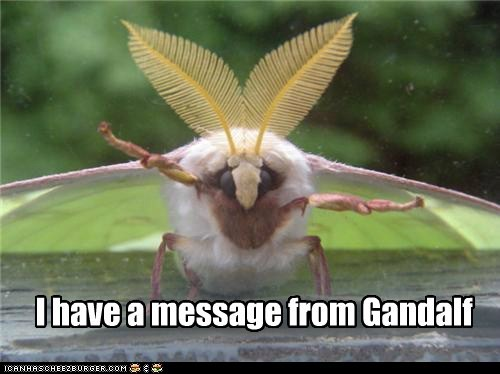 I have a message from Gandalf