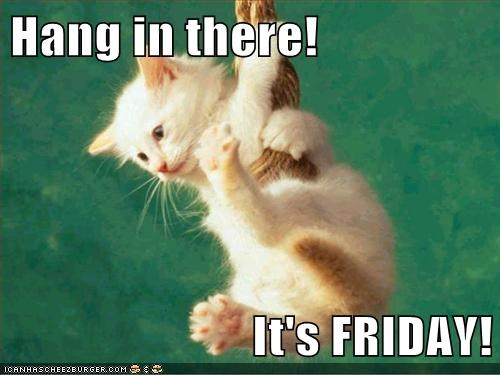 Funny Meme Its Friday : Hang in there! it's friday! lolcats lol cat memes funny cats