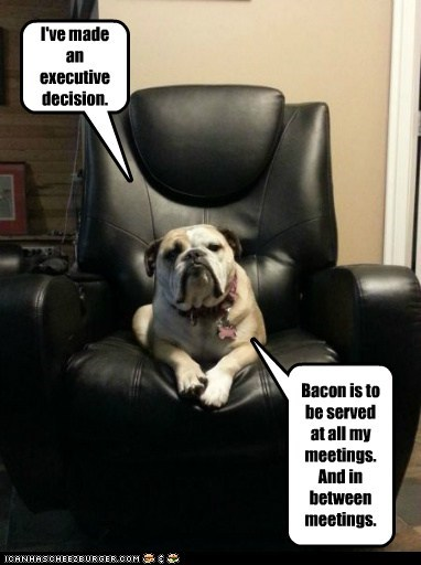 chair,dogs,bulldog,executive decision,the Boss,bacon