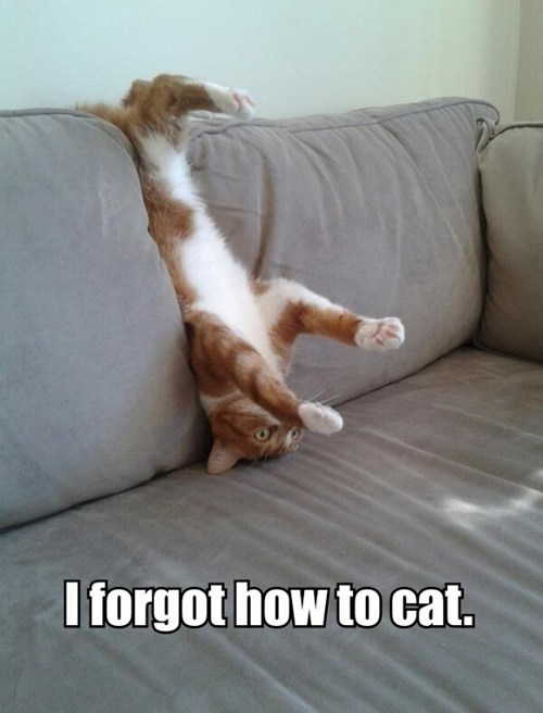 couches stuck captions How To cats are weird forgot Cats derp upside down - 6880897024