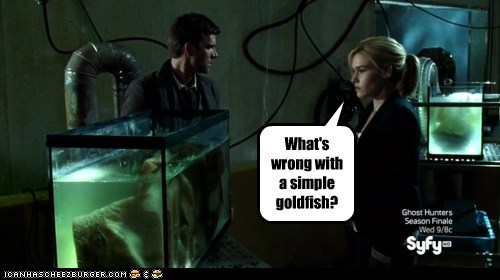 What's wrong with a simple goldfish?