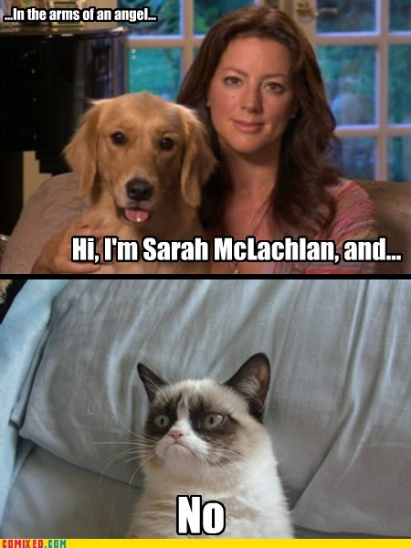 Ad,in the arms of the angels,Sarah McLachlan,Grumpy Cat