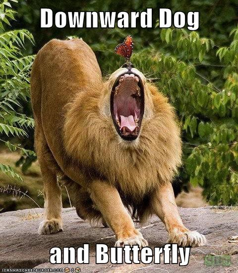 screaming butterfly downward dog poses lion yoga - 6883166720