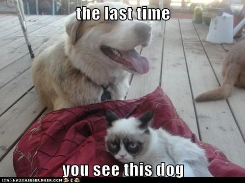 the last time  you see this dog
