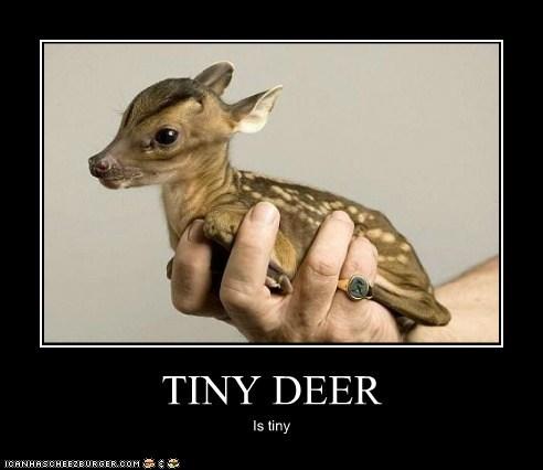 TINY DEER Is tiny