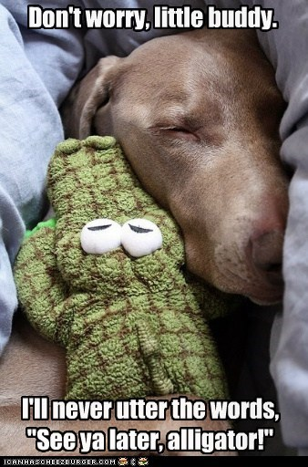 crocodile,dogs,alligator,toy,stuffed animal,little buddy,what breed,sleeping