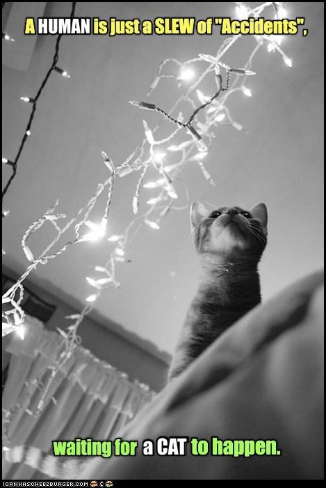 wait accident captions human Cats - 6884294912
