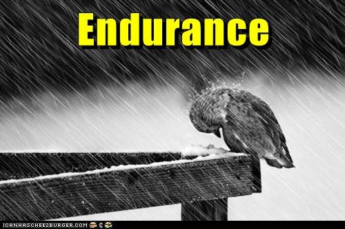 miserable birds raining cold i has it endurance - 6884407296