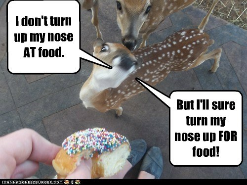 hungry donut nose deer food - 6884503808