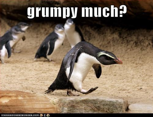 penguins,hunched over,grumpy,angry