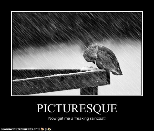 raincoat,annoyed,wet,birds,picturesque,rain