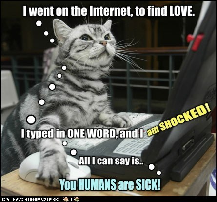 web,gross,internet,porn,pron,shocked,love,Cats