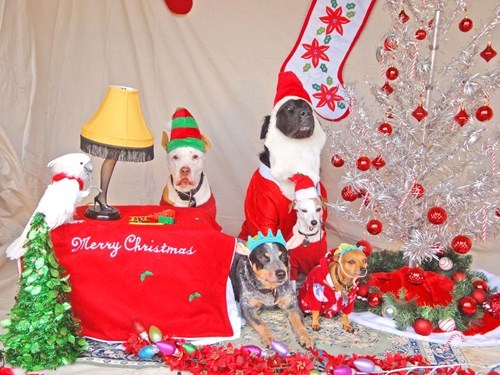 christmas,dogs,reader squee,pets,costume,santa,cockatoos,squee,holidays
