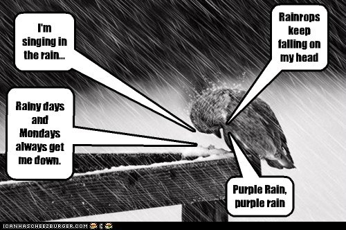 I'm singing in the rain... Rainrops keep falling on my head Rainy days and Mondays always get me down. Purple Rain, purple rain