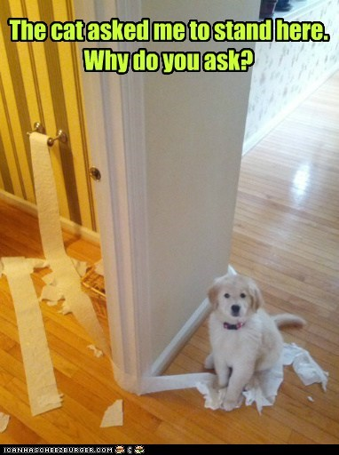 dogs puppies blame the cat toilet paper framed golden retriever - 6884889344