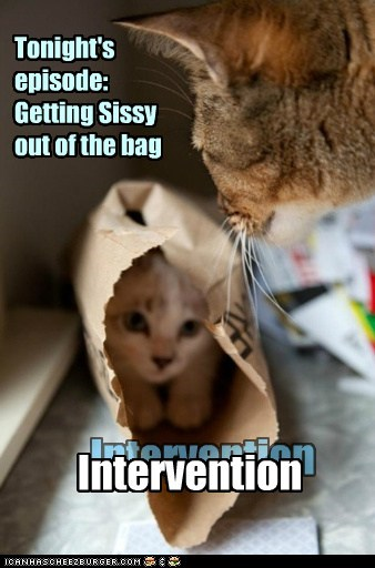 reality show,intervention,bag,captions,Cats