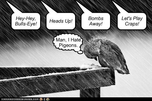hate gross pooping pigeons - 6885455104